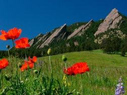 Flatirons and Poppies