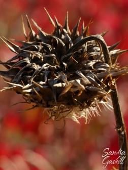 Sunflower & Sumac